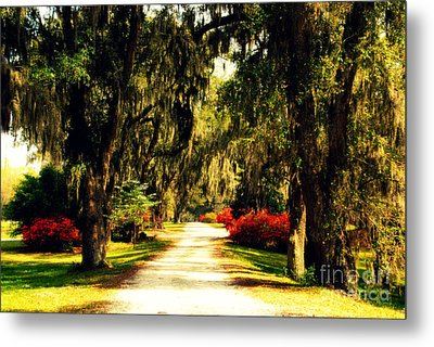 Moss On The Trees At Monks Corner In Charleston Metal Print by Susanne Van Hulst