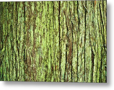 Moss On Tree Bark Metal Print