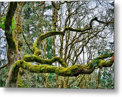 Metal Print featuring the photograph Mossy Green by Kevin Munro