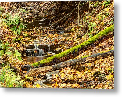 Mossy Log And Stream Metal Print