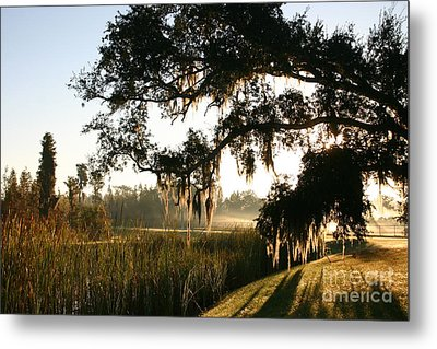Mossy Oak Morning Metal Print by Jeanne Forsythe
