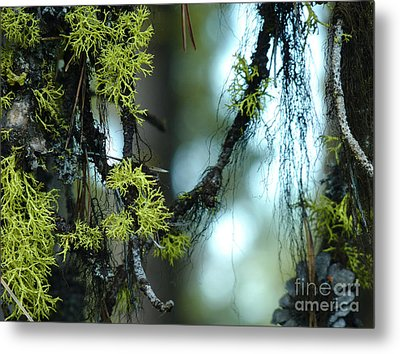 Mossy Playground Metal Print by Meghan at FireBonnet Art