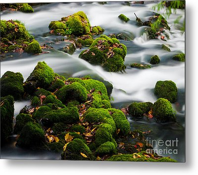 Mossy Spring Metal Print by Shannon Beck-Coatney