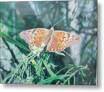 Moth Metal Print by Rosalie Klidies