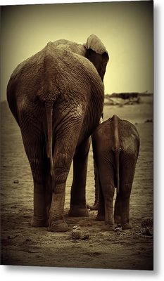 Mother And Baby Elephant In Black And White Metal Print