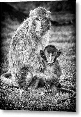 Mother And Baby Monkey Black And White Metal Print