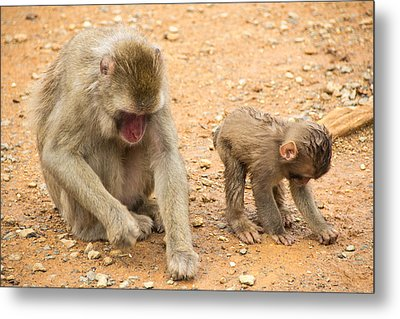 Mother And Child Macaque Metal Print by Laura Palmer