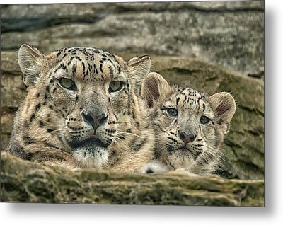 Metal Print featuring the photograph Mother And Cub by Chris Boulton