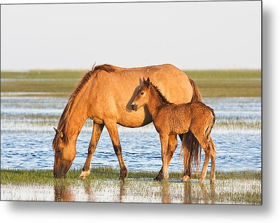 Mother And Foal Metal Print