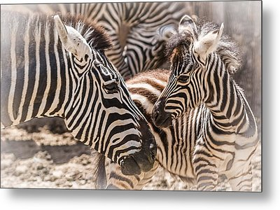 Mother Love Metal Print by Yeates Photography