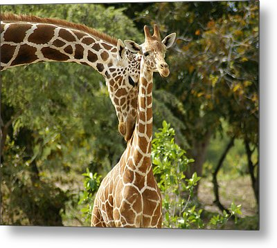 Mothers' Love Metal Print by Swank Photography