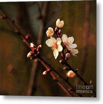 Metal Print featuring the photograph Mother's Spring Blossoms by Marjorie Imbeau