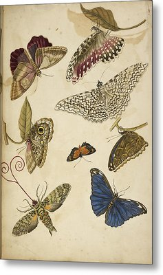 Moths And Butterfiles Metal Print by British Library