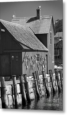 Motif Number One Bw Black And White Rockport Lobster Shack Maritime Metal Print by Jon Holiday