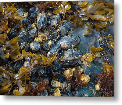 Mound Of Mussels Metal Print by Sarah Crites