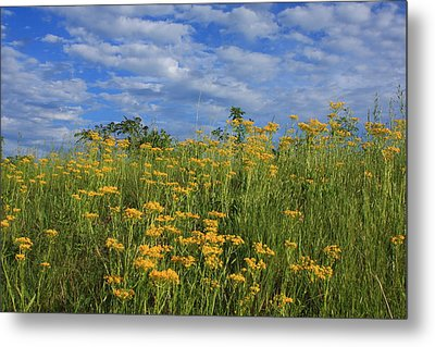 Mount Cheaha Goldenrod-alabama Metal Print by Mountains to the Sea Photo