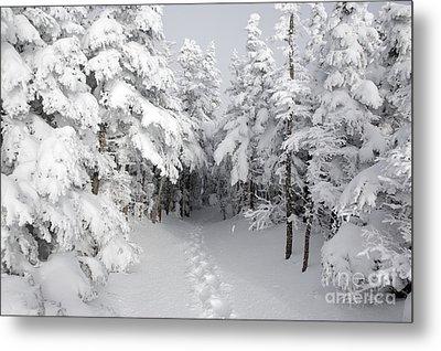 Mount Osceola Trail - White Mountains New Hampshire Metal Print