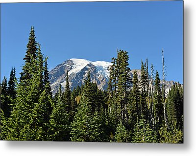 Mount Rainier Evergreens Metal Print