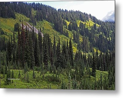 Metal Print featuring the photograph Mount Rainier Ridges And Fir Trees.. by Tom Janca