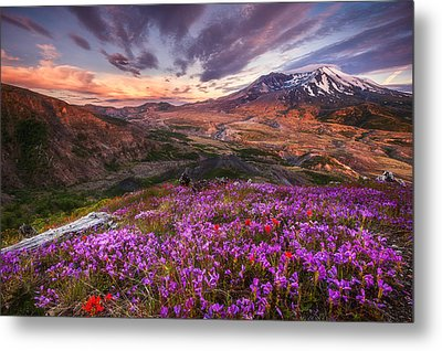 Mount St Helens Lives On Metal Print by Darren  White