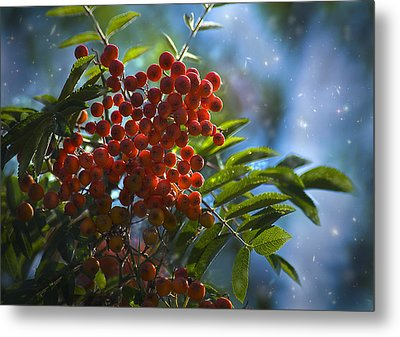 Metal Print featuring the photograph Mountain Ash by Yulia Kazansky
