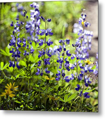 Metal Print featuring the photograph Mountain Flowers by Kjirsten Collier