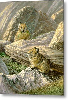 Mountain Haymakers - Pika Metal Print by Paul Krapf
