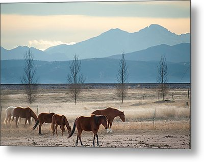 Wild Mountain Horses - Rocky Mountains Colorado Metal Print