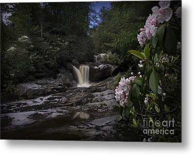 Mountain Laurel And Falls On Small Stream Metal Print by Dan Friend