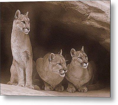 Mountain Lion Trio On Alert Metal Print