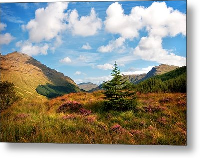 Mountain Pastoral. Rest And Be Thankful. Scotland Metal Print by Jenny Rainbow