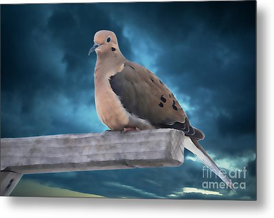 Metal Print featuring the photograph Mourning Dove Blue Sky by Marjorie Imbeau