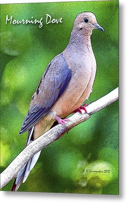 Metal Print featuring the photograph Mourning Dove Digital Art by A Gurmankin