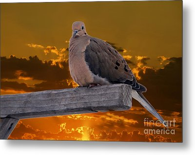 Metal Print featuring the photograph Mourning Dove Orange Sky by Marjorie Imbeau
