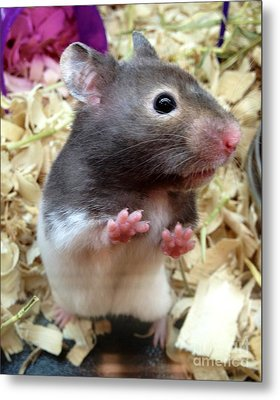 Mouse In The House Metal Print by Carla Carson