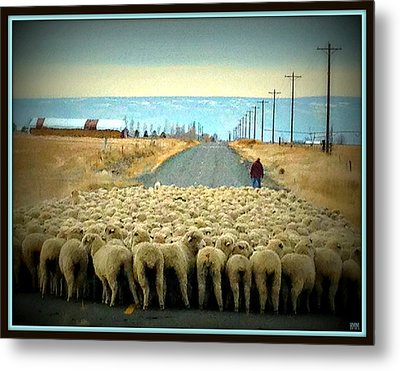 Metal Print featuring the photograph Moving Sheep by Heidi Manly