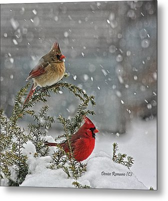 Mr. And Mrs. Cardinal Metal Print by Denise Romano
