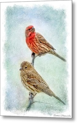 Mr And Mrs House Finch Digital Paint With Frame Metal Print by Debbie Portwood