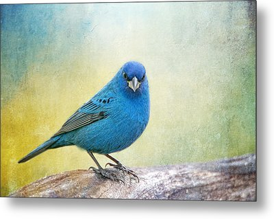 Mr. Blue Metal Print by Bonnie Barry