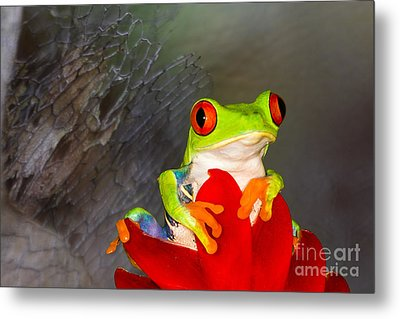 Mr. Curious Metal Print by Mary Lou Chmura