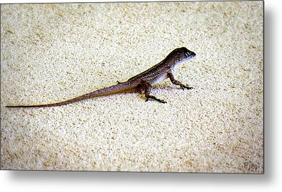 Metal Print featuring the photograph Mr. Gecko by Pennie  McCracken