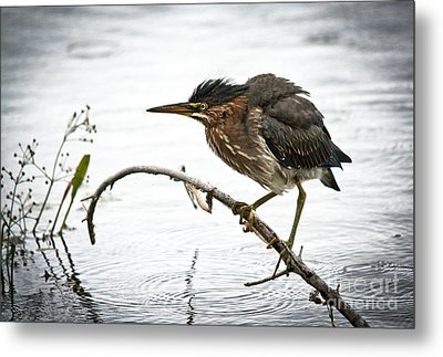 Mr. Green Heron Metal Print