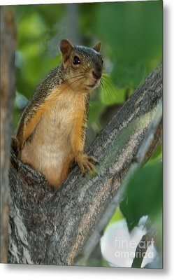 Mr.  Inquisitive  Metal Print