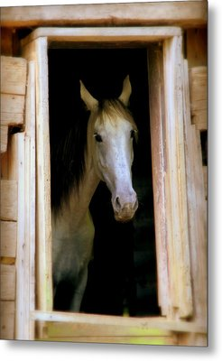 Mrs. Ed Metal Print by Karen Wiles