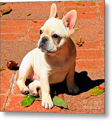 Ms. Quiggly Metal Print
