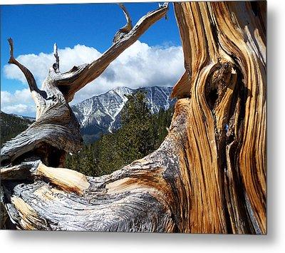 Mt. Charleston Thru A Tree Metal Print