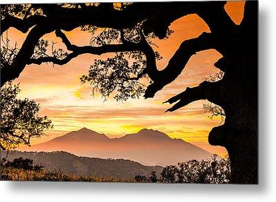 Mt Diablo Framed By An Oak Tree Metal Print by Marc Crumpler