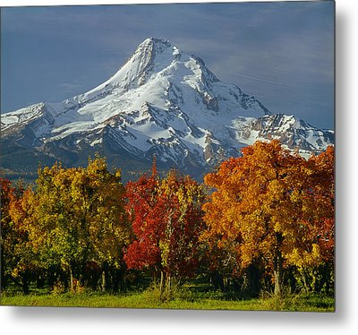 1m5117-mt. Hood In Autumn Metal Print
