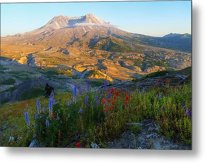 Mt. St. Helens Golden Hour Metal Print