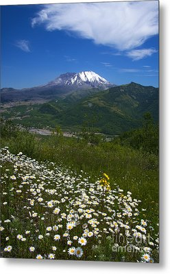 Mt. St. Helens View Metal Print by Mike Dawson